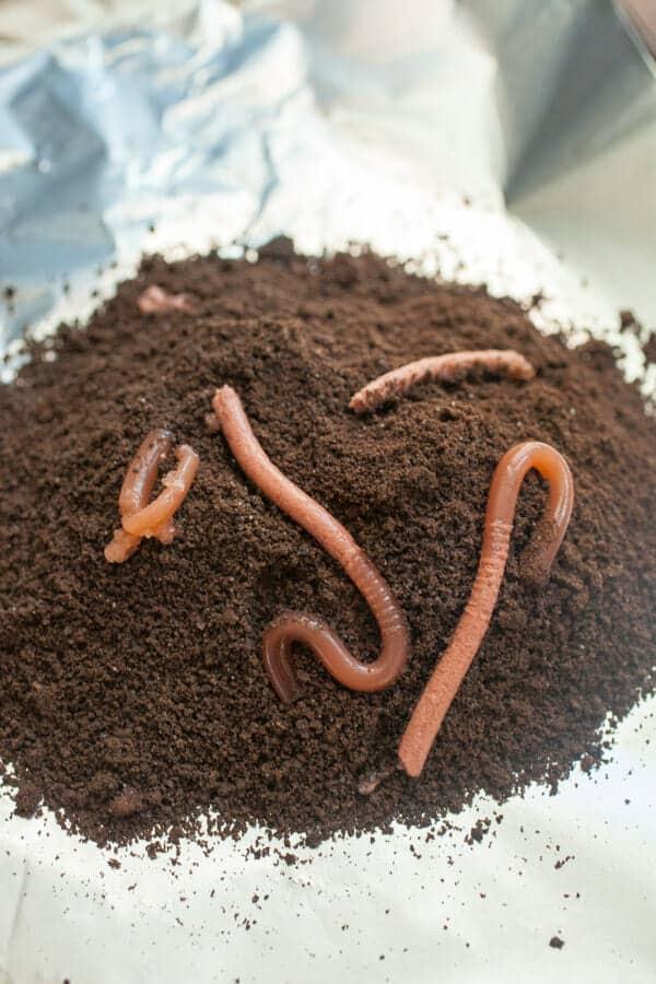 homemade realistic worms halloween recipe macheesmo