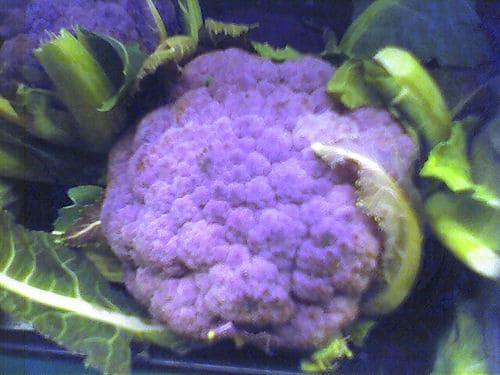 purplecaul